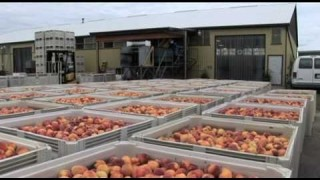 Fruit Processing in the Niagara Region video