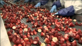 How It's Made – Frozen Fruit