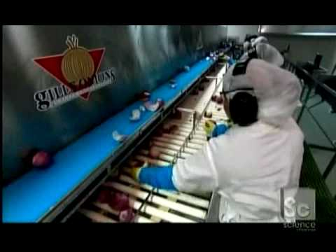 How It's Made Onions