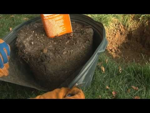 How to Plant a Tree: Planting Flowering Trees, Tree Shrubs & More
