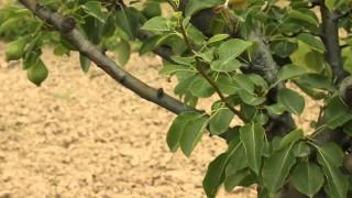 Pemetore me Dardhe – Krijimi pemetores, Sherbime ne pemetore