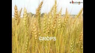 Science – How crops grow – English