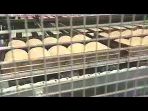 The industrial bread process: an overview for children (KS2)