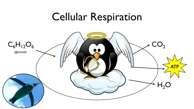 Cellular Respiration: What Food is For