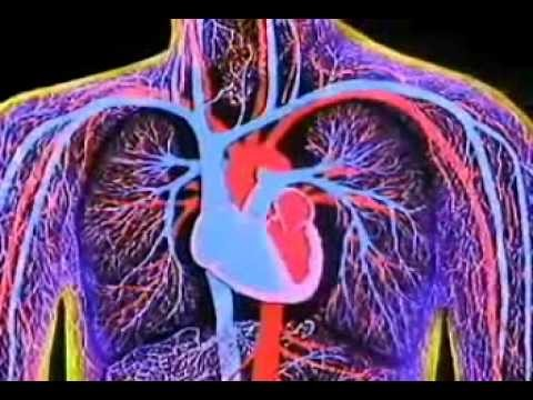 3D ANIMATION OF WORKING OF HEART