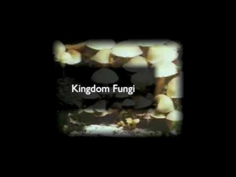 5 Kingdom Classification System