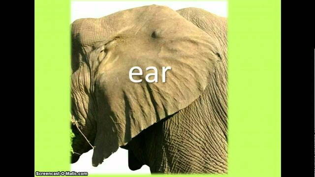 Animals: Body Words