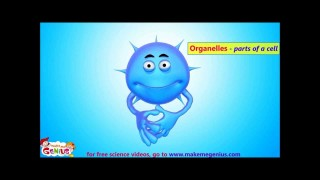 Animals Cells Structure & Functions Animation Video for Kids
