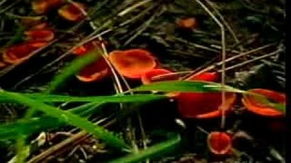Biology Of Fungi Part 2