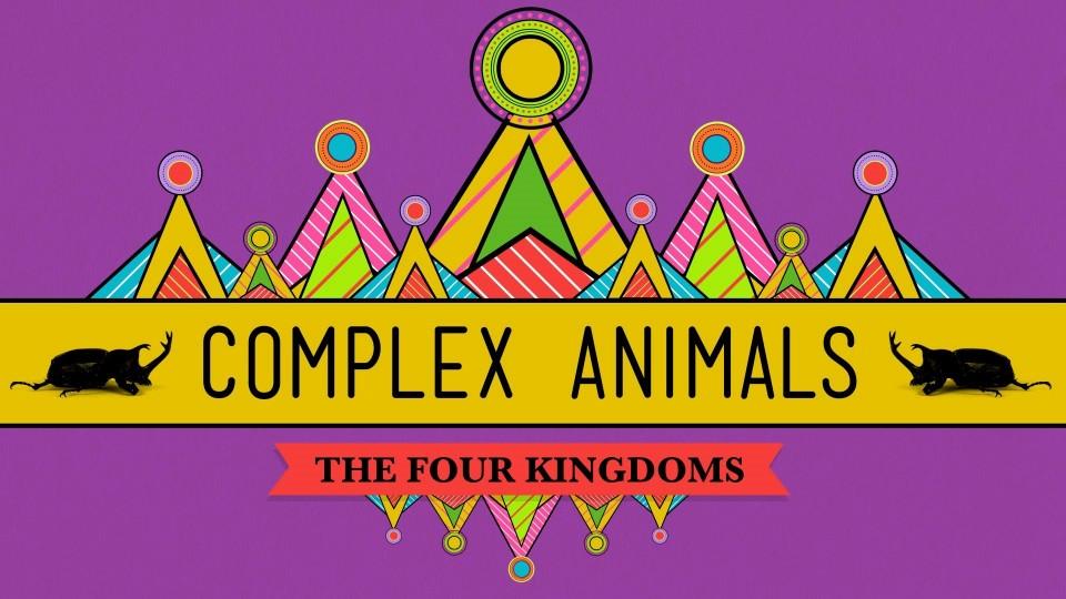 Complex Animals: Annelids & Arthropods – CrashCourse Biology #23
