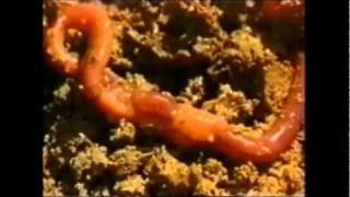 Cnidaria & Porifera