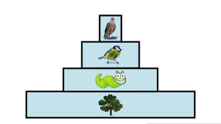 Ecological Pyramids | Ecology and Environment | the virtual school