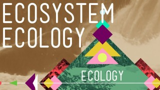 Ecosystem Ecology: Links in the Chain – Crash Course Ecology #7