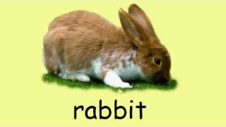 English vocabulary – Animals 1