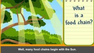 Food Chain Basic.avi