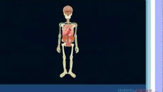 Human Body Lesson for Kids   Learn about the Human Body