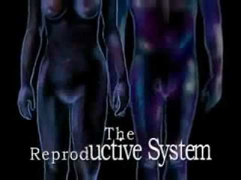 Human Body Systems: Reproductive System