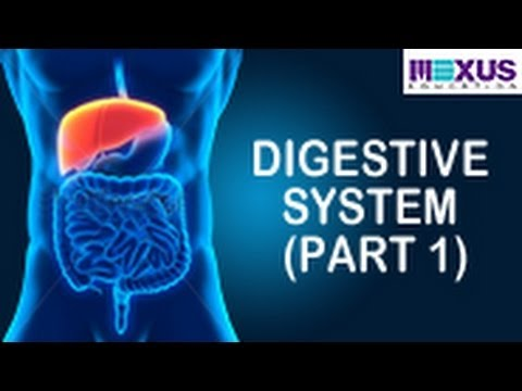 Learn About Digestive System | Human Digestive System Animation- Part 1
