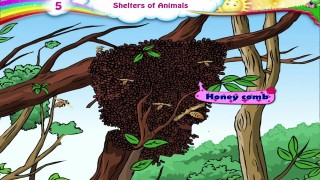 Learn Grade 3 – Science – Animals and Their Shelters