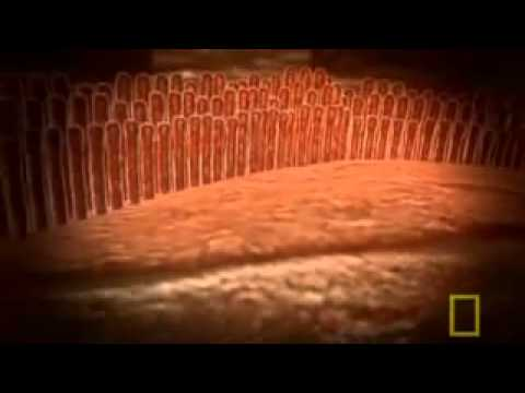 National Geographic – Inside the Living Body 2 9
