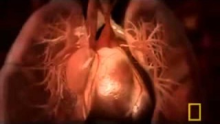 National Geographic – Inside the Living Body 1 9