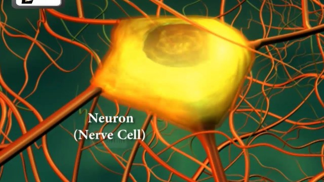 Neurons or nerve cells – Structure function and types of neurons | Human Anatomy | 3D Biology