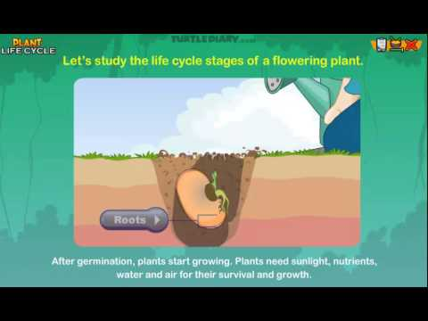 Plant Life Cycle – Online Lesson for 3rd Grade