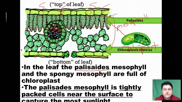 Plant Organs: Structure and Function