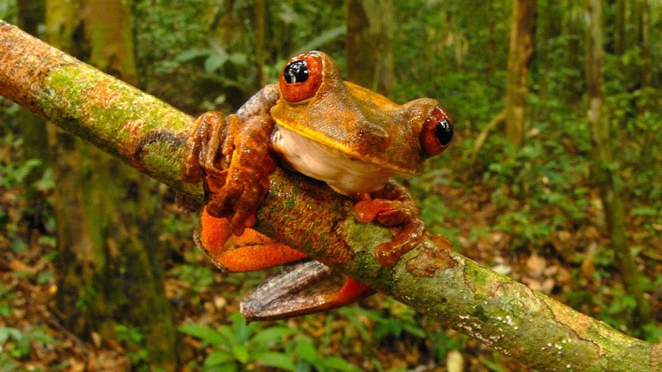 Science Bulletins: Biodiversity Unveiled—New Animal Discoveries of 2013