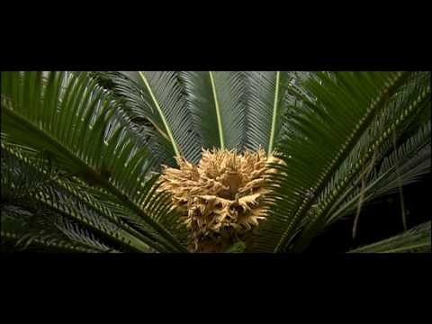 Seed Plants   Biology   Botany
