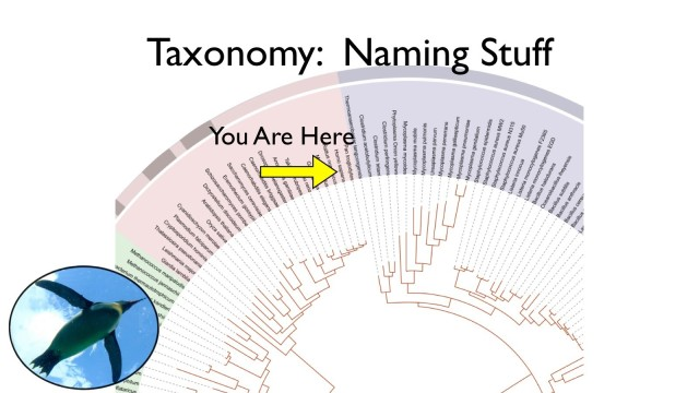 Taxonomy and Systematics