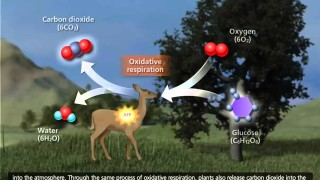 The Carbon Cycle [3D Animation]