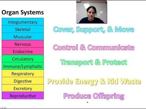 Tissues & Organ Systems (Unit 1 – Video 8)