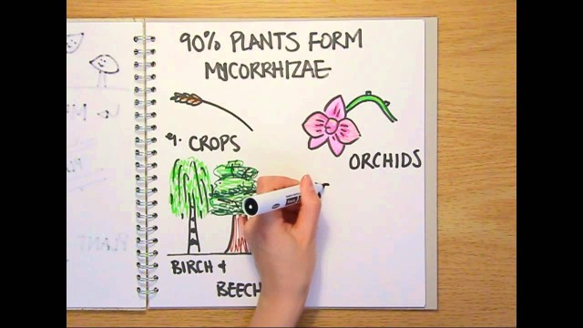 What is a fungus? – Naked Science Scrapbook