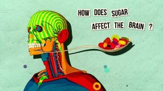 How sugar affects the brain – Nicole Avena