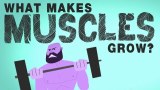 What makes muscles grow? – Jeffrey Siegel