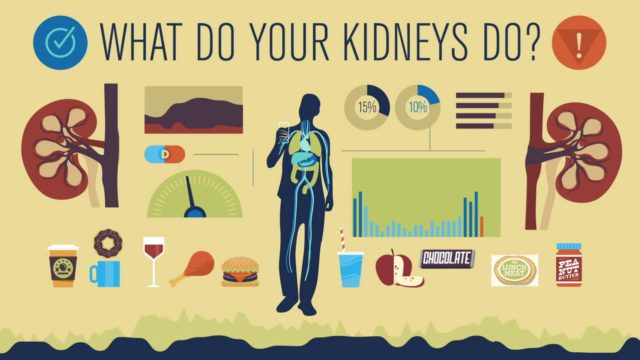 How do your kidneys work? – Emma Bryce
