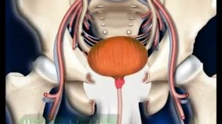 Human Urinary System || 3D animation || Biology
