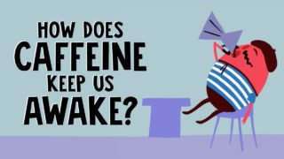 How does caffeine keep us awake? – Hanan Qasim