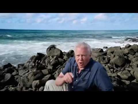 David Attenborough's Galapagos David Attenborough's Galapagos Episode 2 Adaptation