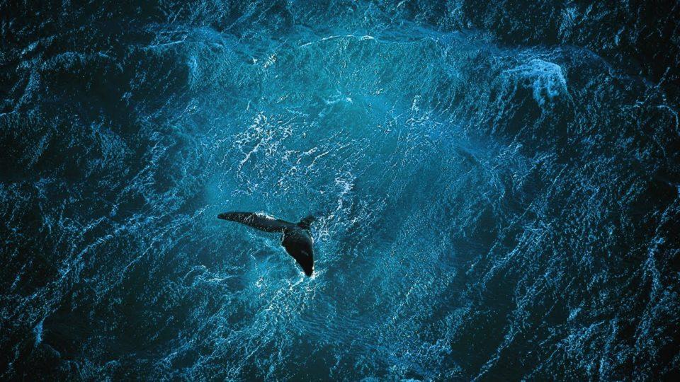 Planet Ocean [UK]- the film by Yann Arthus-Bertrand & Michael Pitiot