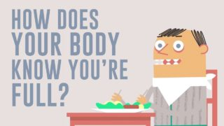 How does your body know you're full? – Hilary Coller