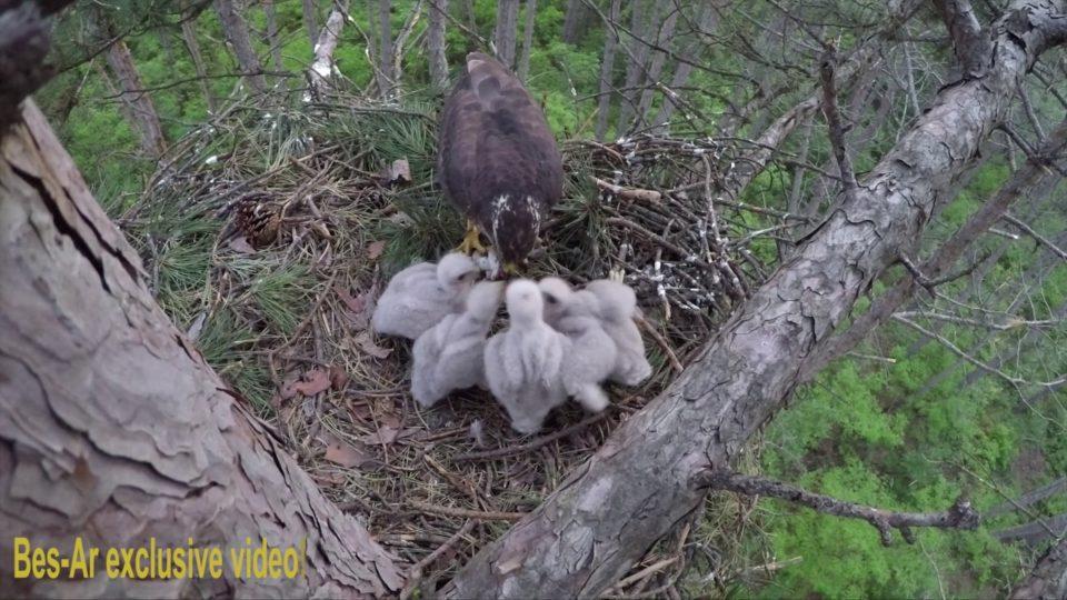 Nena Shqiponje ushqen te vegjlit! Video excklusive ne Kamenice