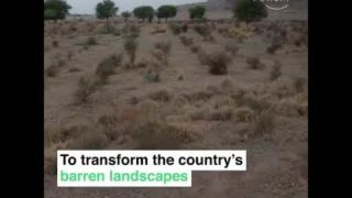Billion tree tsunami is a green gold for pakistan || world economic forum