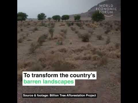 Billion tree tsunami is a green gold for pakistan || world economic forum