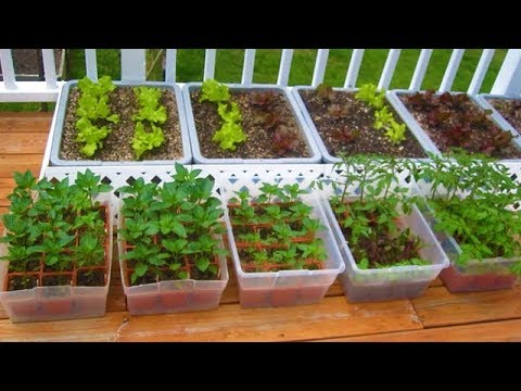How to start a Container Garden from Seed Easy! STEP by STEP grow vegetables plant organic