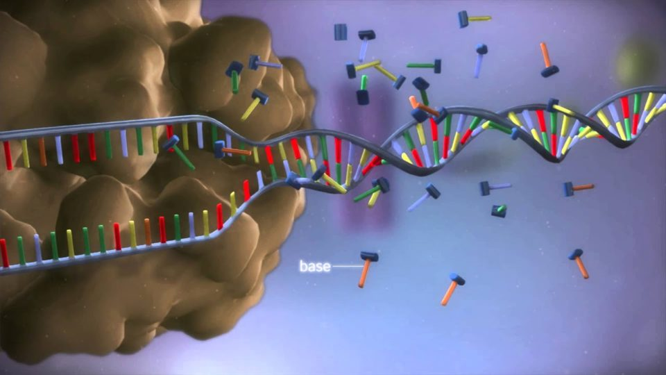 From DNA to protein – 3D